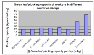 Green leaf plucking capacity of workers in different countries